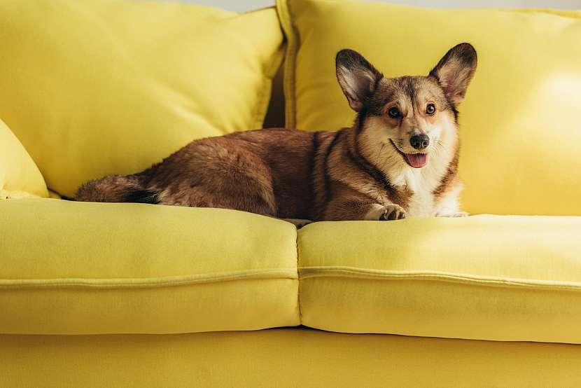 Pes na gauči