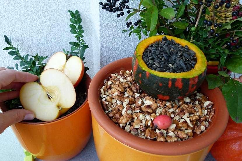 Balkonová dekorace a krmítko v jednom: nasypte semena a ořechy