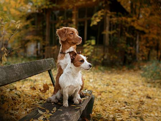 Štěně, nebo dospělý chlupáč? Záleží na tom, co od psa očekáváte. (Zdroj: Depositphotos (https://cz.depositphotos.com))