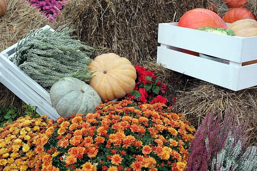 Dýně a tykve mohou vévodit podzimní dekoraci jako skutečné královny podzimu