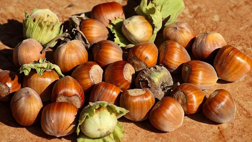 Lískové ořechy jsou hodně dobré a hodně zdravé. Upečte si oříškový věnec a hned budete mít lepší náladu