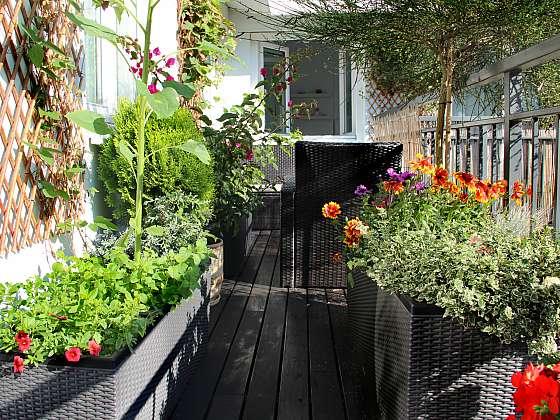 Při pěstování na balkoně lze kombinovat kvetoucí druhy, zeleninu i bylinky (Zdroj: Depositphotos)