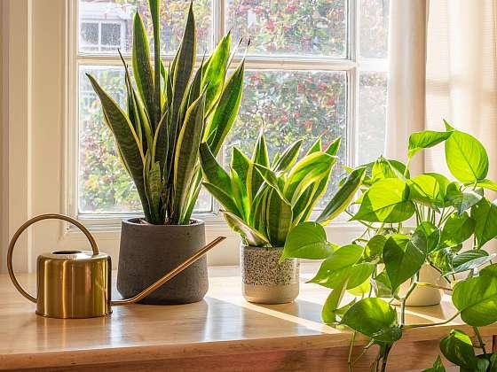 V 80. letech začala NASA hledat ty nejlepší čističky vzduchu mezi rostlinami a my vám nyní přinášíme výsledek studie (Zdroj: Depositphotos (https://cz.depositphotos.com))