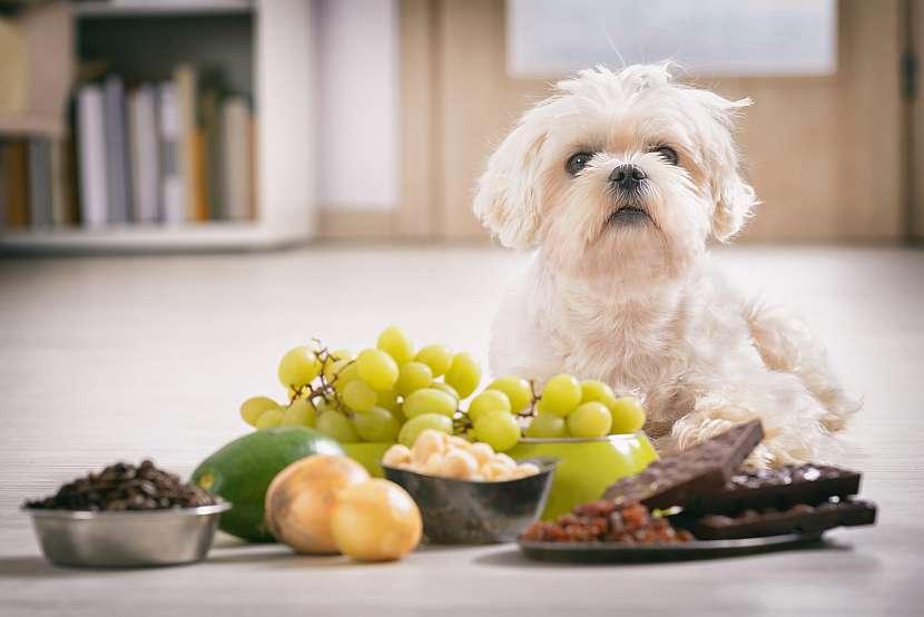 Pes s jídlem