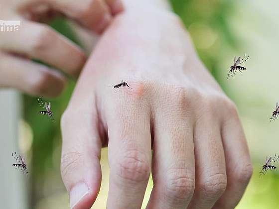 Nastala sezona komárů, chraňte se proti bodavému hmyzu (Zdroj: Prima DOMA MEDIA, s.r.o.)