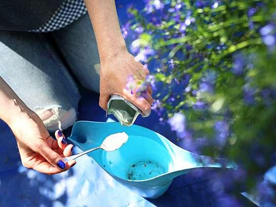 Příprava výživy balkonových rostlin (Zdroj: Depositphotos)