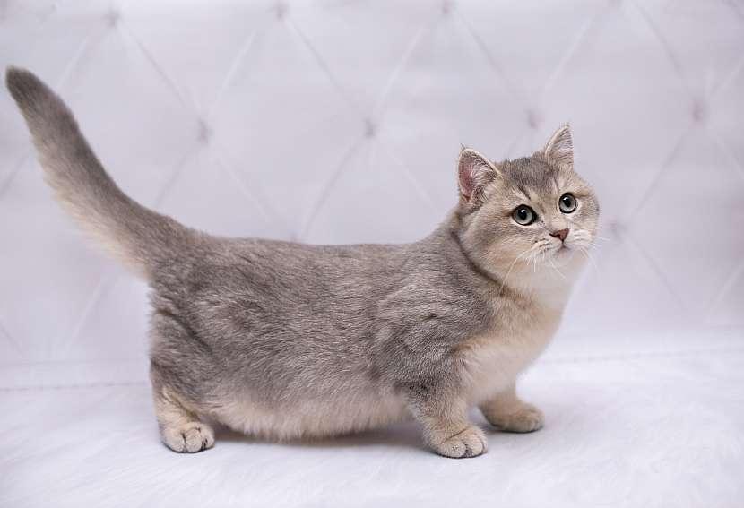 Kočka3