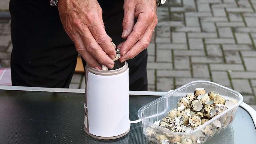 Proč jíst křepelčí vajíčka: skořápka obsahuje mnoho cenných prvků