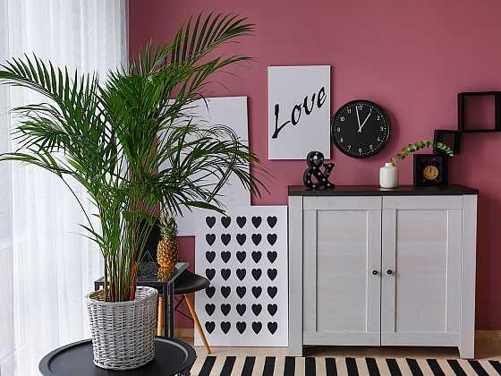 Areka je dekorativní palma, která zaujme svým bujným vzrůstem (Zdroj: Depositphotos)