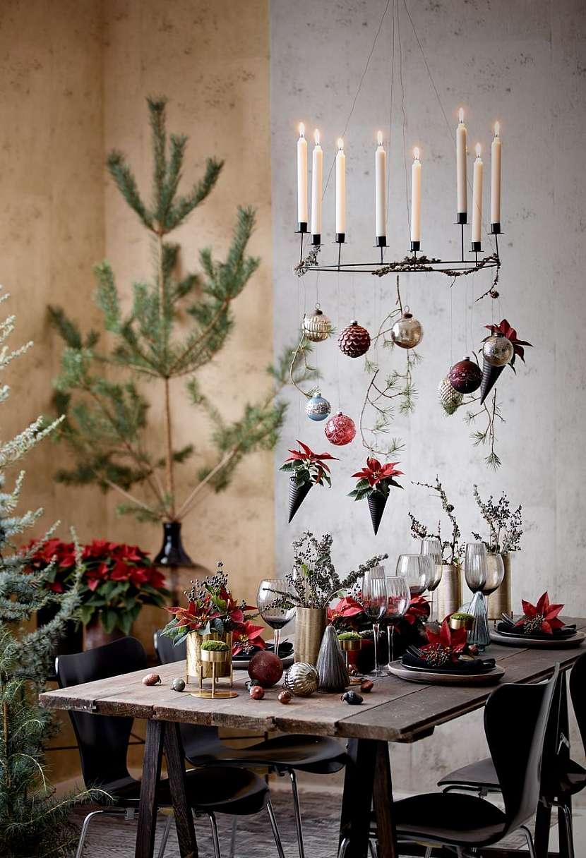 csm_2020_poinsettia_01000_Christmas_Green_Spirit_01_3a421cc9a6