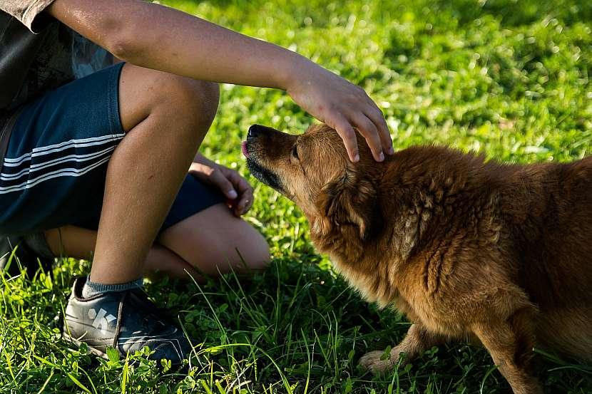 Pes chytne nejčastěji klíště nebo blechu