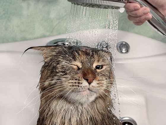 Máte doma kočku, která nenávidí vodu? Poradíme vám s jejím koupáním (Depositphotos (https://cz.depositphotos.com))