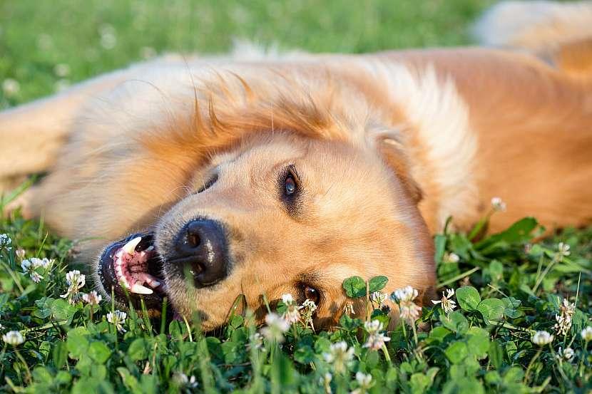 Šťastný pes