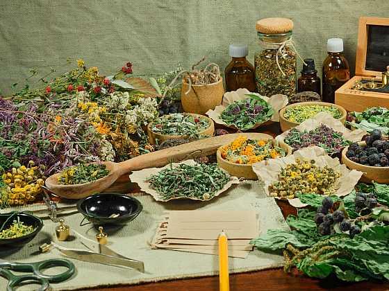 Každá bylinka obsahuje množství léčivých látek prospěšných pro náš organismus (Zdroj: Depositphotos)