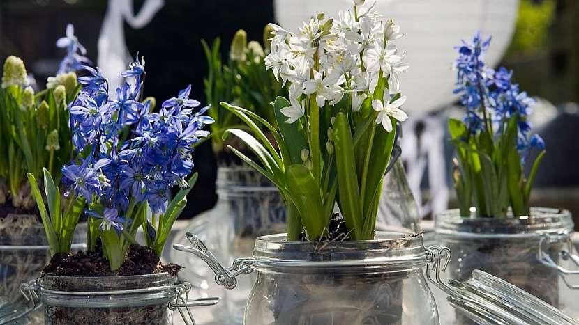 Tipy na recyklaci skla: květináče na drobné jarní cibuloviny