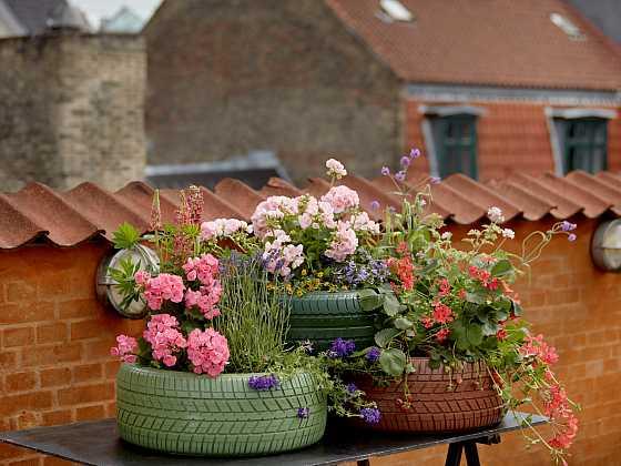 I pneumatiky mohou být ozdobným prvkem vaší zahrady (Zdroj: Pelargonium for Europe)