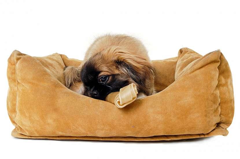 Pes v pelíšku