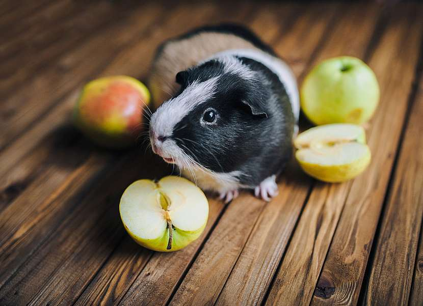 Morče a jablka