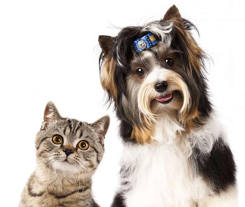 Zvědavá kočka a pes